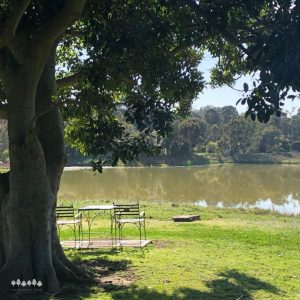 Seating under a tree by the lake